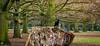 Truncated (Khalid H Abbasi) Tags: nature d90 nikon coventry earlsdon tree crow outdoors warmemorialpark