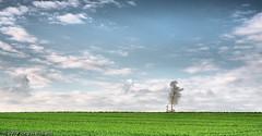 JW20083723-dri (jwendland) Tags: sky tree nature clouds landscape natur himmel wolken landschaft baum dri hdr hdri