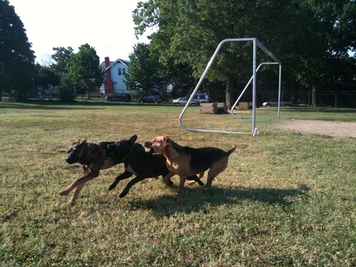 Saturday morning dog park at Clark School in Petworth