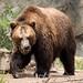 Woodland Park Zoo Seattle 084