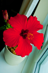 Hibiscus (Thomas Tolkien) Tags: school copyright art sports tom digital photography photo education nikon yorkshire d70s nikond70s teacher website creativecommons teaching tolkien northyorkshire jrr tuition twitter robertbringhurst bringhurst hibiscuswonder thomastolkien tomtolkien httpwwwtomtolkiencom httpthomastolkienwordpresscom tolkienart notrelatedtojrrtolkien tolkienteacher tolkienteaching