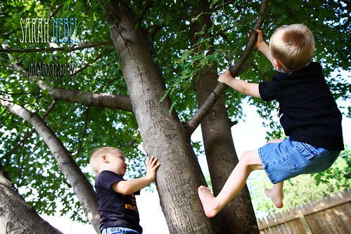 . seth and andrew climbing the tree .