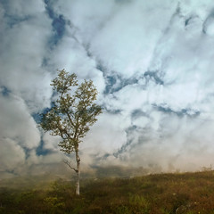 Norwegian wood (Wen Nag (aliasgrace)) Tags: sky tree art nature weather clouds photoshop square alone loneliness 2550fav single montage imagination layers lonely lonesome