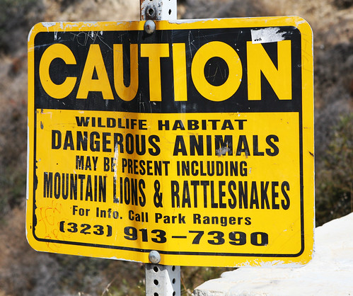 Mountain Lions & Rattlesnakes - For Dan Kennedy
