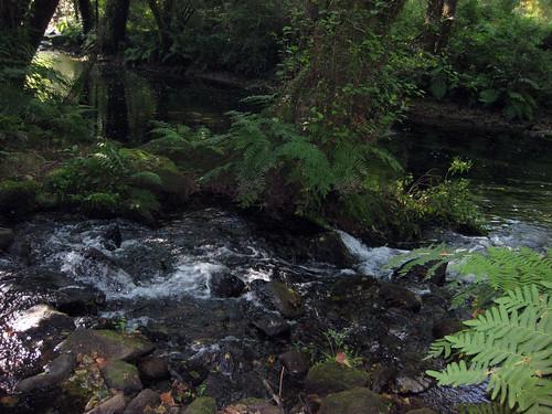 Río Coura e  Borzendes (afluente)