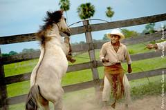 _DSC2096 (Roberta Cadore) Tags: pordosol brazil horse brasil cowboys landscape nikon paisagem aligator cavalo matogrosso pantanal tuiuiu jacar lao capela nikond3