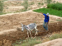 ploughing the fields (Frans.Sellies) Tags: morocco maroc marokko taliouine