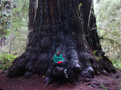 Jess on a giant (kidhack) Tags: redwoodnationalpark