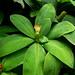 Fairchild Tropical Botanical Garden_2