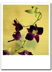 We Can Enthrall (iAjla) Tags: flowers canon purple orchids canon300d photoshopped bouquet joo ajla