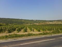 Виноградники под Севастополем