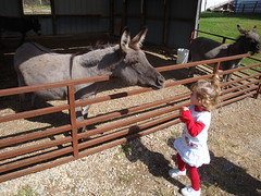 Lilliann Feeding A Donkey