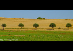 Orange saplings / Narancsfacsemeték (FuNS0f7) Tags: summer mediterranean cyprus minimal kiti naturesfinest sonycybershotdscf828 cyprian abigfave 100commentgroup orangesaplings