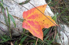 Leaf_10609