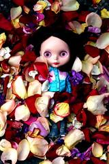 4/4 Rosey Among the Rose Petals