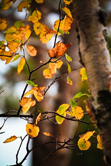 Fall colors are coming soon (ktpupp) Tags: camping summer beach up rob lakemichigan lakesuperior kt mackinacbridge picturedrocks 12milebeach ef70200mmf4lusm img4266 canoneosdigitalrebelxsi 2009katesumbler