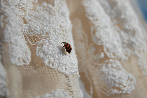 miss ladybug on my dress