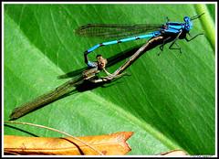 Love (ahliggett) Tags: nature macromarvels beautifulmonsters