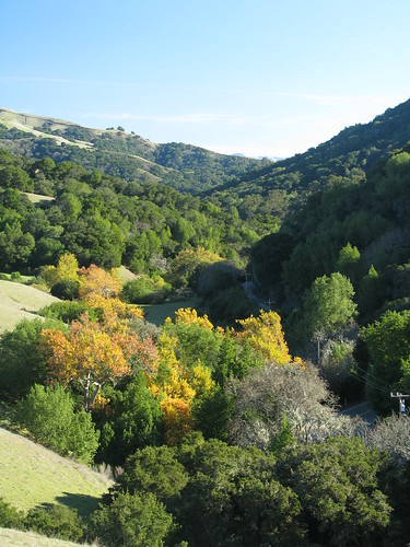 Colorful trees on Palomares Road