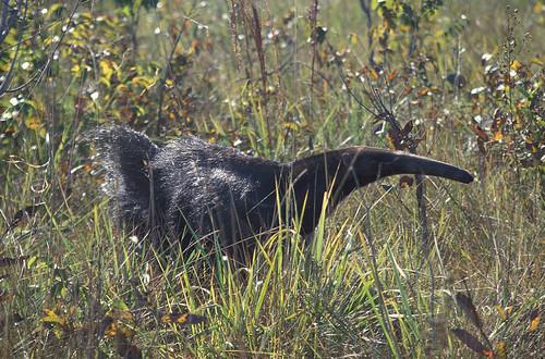 Cerrado Goias Brazil ecosystem environment nature fauna wildlife conservation species