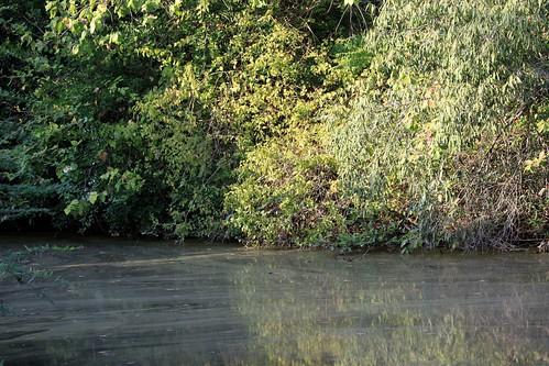 Low 2009-11-29 Sasan Gir - 01 Safari 12