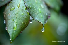 HAPPY WET BOKEH WEDNESDAY (Marquisa -) Tags: rose canon droplets drops interestingness texas bokeh houston explore svetlana marquisa explored hbw anawesomeshot svetlanavasiliadi russiantexas svetan svetanphotography exploreddec22009164 svetalanavasiliadi
