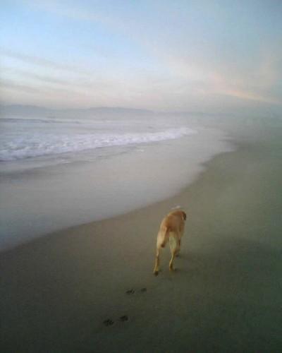 Venice Beach Dog