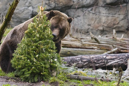 Winter_Celebration_Grizzly_Ryan_Hawk