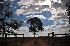Bienvenue (Claudia Oseki) Tags: road brazil sky tree nature brasília brasil landscape bush cloudy paisagem estrada goiânia goiás cloudys