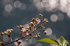 Ristorante...... vista lago (albi_tai) Tags: light nikon ape fiore luce controluce ohhh d90 bagliori luccichio nikond90 estremità albitai mygearandme