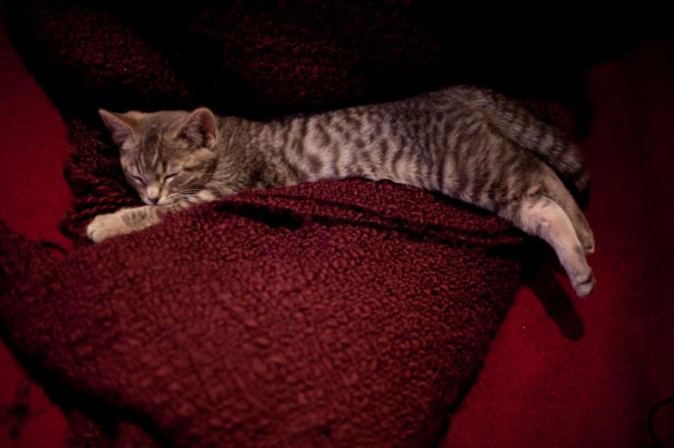 Long Kitten