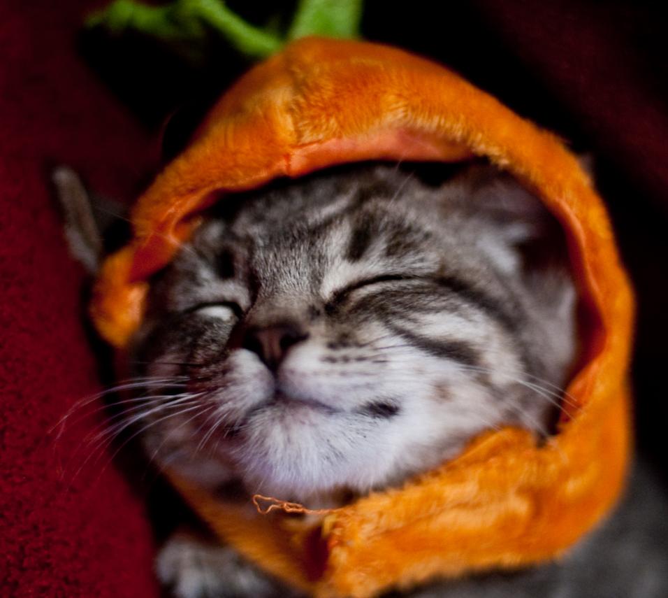 I Am Zen Pumpkin