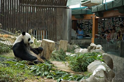 Panda stocking it up for next round.