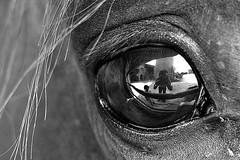 Horse Vision (Donato Buccella / sibemolle) Tags: blackandwhite bw horse selfportrait reflection milano cascina barona myfavouritemodel canon400d sibemolle