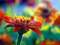 Sunny afternoon (irene gr) Tags: flowers blue red macro green yellow 50mm bokeh olympus explore f2 frontpage zuiko e30 43 vividcolors zd fourthirds 50mmf2 zuikodigital ysplix irenegr
