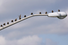 12 Birds (caribb) Tags: travel pet canada birds plane flying airport montral quebec montreal aircraft aviation airplanes jet aeroplane qubec transportation lightpost aeroport 2009 airliner dorval avion yul jetliner aroport passengerplane passengerjet trudeauairport cyul