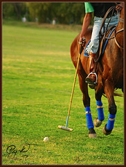 Approach (IshtiaQ Ahmed (is Back)) Tags: pakistan horse club stick approach polo racecourse rawalpindi sucess practive ishtiaq
