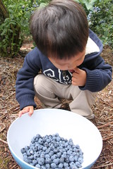 Eating Blueberries