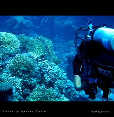Marsa Alam - Diving (Andrea Costa Creative) Tags: desktop sea wallpaper fish macro tree art nature water closeup illustration photoshop canon painting creativity photography design interesting marine paint underwater arte post graphic background postcard sub creative myspace powershot comunicazione explore concept retouch ideas retouching disegno sx1 grafica facebook immersion linkedin interessi comunication photorealistic postprocessing fotoritocco windflower bestphoto photoretouching illustrazione metadesign fotorealismo ritocco netlog andreacosta sx1is sx1best actheart socialimg