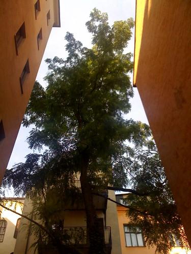 Träd på gården