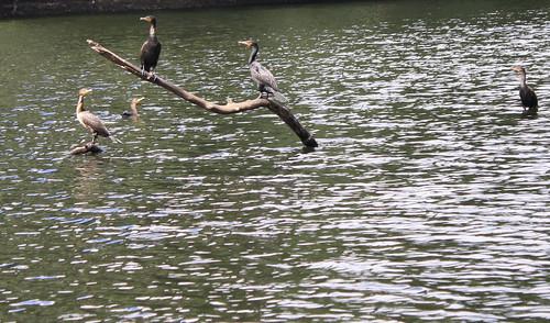 Loon Leap 0