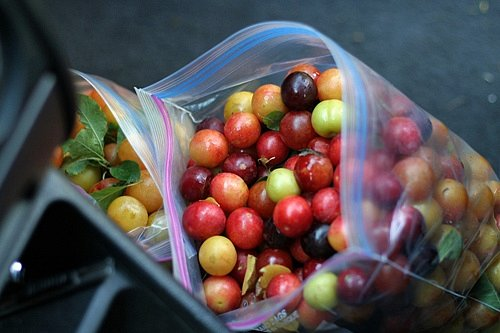 plums in car