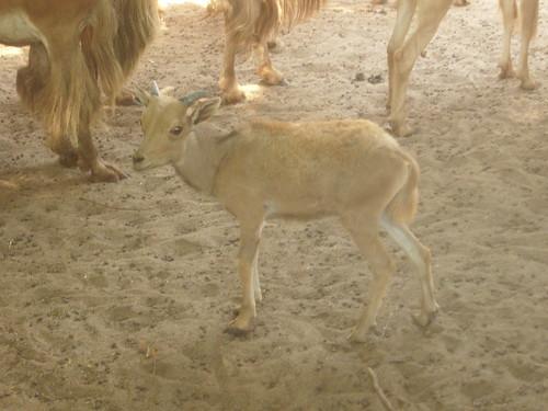 Giza Zoo حديقة الحيوان بالجيزة