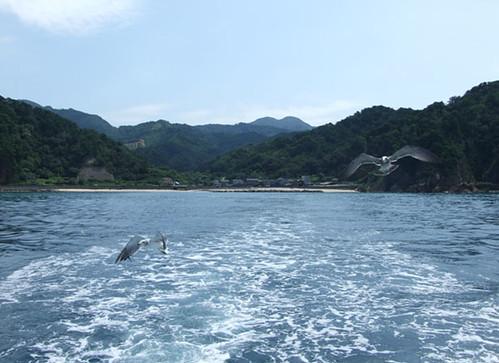 ウミネコと航跡~笹川流れ