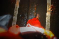 Walking Between The Lines (firoze shakir photographerno1) Tags: finale hinduism visarjan hindus incom hopeandhindutva network18 lalbaghcharajavisarjan barefeetblogger lalbaughcharaja lalbaghchyarajavisarjan