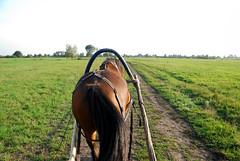 DSC_1695 de kont van het paard.jpg