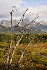 Grand Teton with trees (halfgreek2000) Tags: trees mountains landscape jackson grandtetons grandtetonsnationalpark moosewyoming