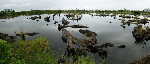 羅東林場儲木池大景
