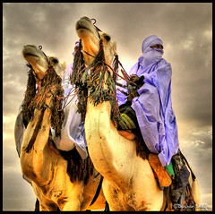 Knights of the Desert ! (Bashar Shglila) Tags: world white sahara festival proud photography gallery desert photos top sony best most worlds popular libya camels dsc camello touareg tuareg  libyan  libyen   lbia  libi daraj mahari  libiya sahran  impressedbeauty twareg liviya toareg libija   hx1  dschx1    lbija  lby libja lbya liiba livi