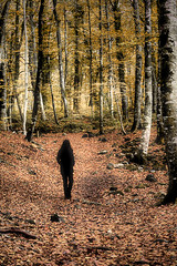 a walk into the wood (Ferran.) Tags: wood people woman nature way dar natura catalonia catalunya garrotxa bosc ripolles esq fageda camins fagedadenjord
